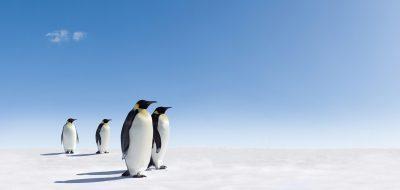 Pingwin – i wszystko jasne!