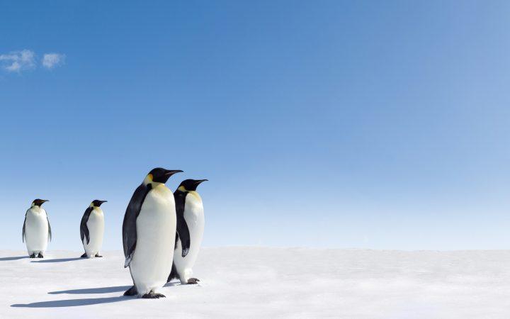 Pingwin - i wszystko jasne!